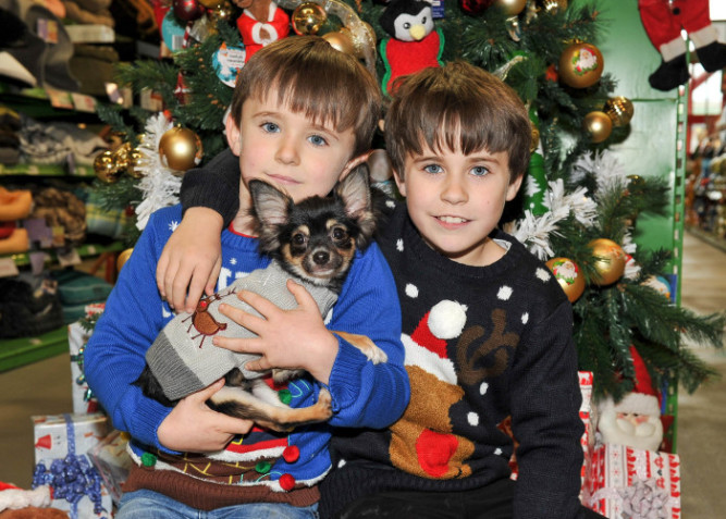 """FREE PIC-NO REPRO FEE Brothers Cathal Cross (8) and Darragh Cross (6) from Ballincollig, Co Cork with Chihuahua 'Gizmo' pictured at Maxi Zoo's announcement of the Top 10 selling Christmas Toys for Pets based on the spending patterns of Irish pet owners at Maxi Zoo's seventeen stores nationwide. Picture: David Keane. Top 10 selling Christmas toys for Irish pets revealed by Maxi Zoo1st December 2015: The pet experts at Maxi Zoo – Ireland's largest pet store chain - have released a list of the Top 10 selling Christmas toys for pets based on the spending patterns of Irish pet owners at its seventeen stores nationwide.Brain training intelligence toys to teach cats and dogs new tricks, scratching boards that protect household furniture from pets who like to scratch and chew things, snuggle and comfort toys are among this year's biggest sellers.""""Irish pet parents are really spoiling their pets this Christmas. Brain training intelligence toys are flying off the shelves this year and comfort toys are also in big demand,"""" said Alice Cross, Executive Director of Maxi Zoo.""""Our biggest seller is the Kong Wobbler brain training intelligence toy. It is great for teaching dogs to slow down while eating, which helps to reduce pet obesity. You load it with your pet's favourite treats and they learn how to roll it around to dispense the treats,"""" said Alice.""""Our Cat Scratching Board is popular with cat owners. It is shaped like a block of cheese with a board that cats love to scratch. Pet owners who have had their furniture destroyed by scratching cats also consider the €16.99 cost as a great investment in protecting their furniture,"""" she added.""""We have a range of similar toys for dogs who like to chew things and the big seller is a steak shaped toy. These become comfort toys for dogs just like children have their 'security blanket'. The steak toy is a huger seller and something of a festive tradition,"""" Alice continued.Cat owners are also demanding toys t"""