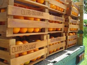 Club Orange Oranges