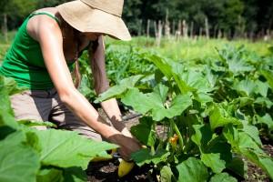 Sustainable Food